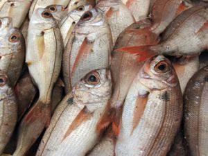 pescado-nicaraguense