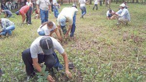 639x360_1376880138_Plantando un árbol