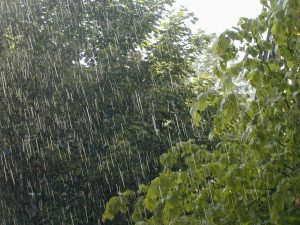 lluvias-plantas