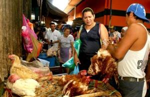 ofertan-gallinas-indias-en-nicaragua