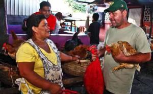 venta-de-gallinas