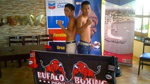 Bufalo boxing