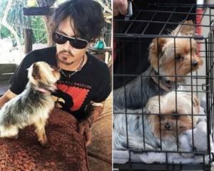 Johnny-Depp-perros-370x297