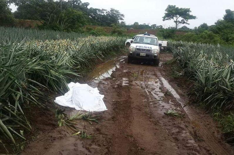cuerpo-tierra-trabajador-deshijaba-plantacion_LNCIMA20150630_0178_5 (1)