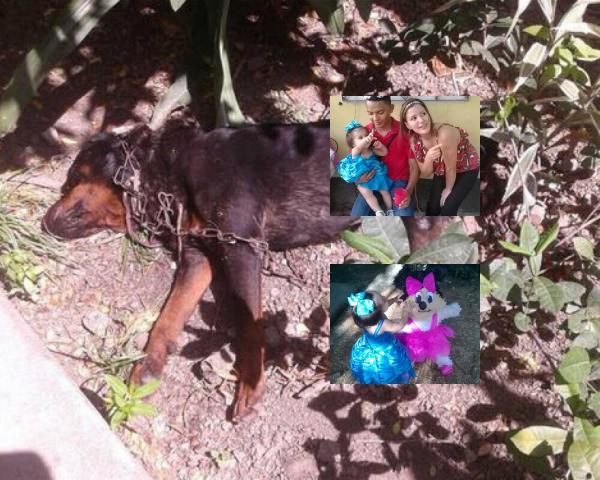 Niña de 2 años muere atacada por perros Rottweiler en Honduras
