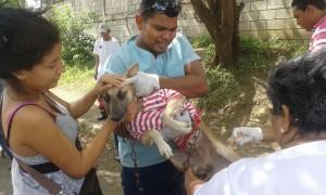 jornada nacional vacunacion canina nicaragua