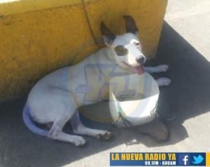 el perro de Jimmy Gutierrez (1)
