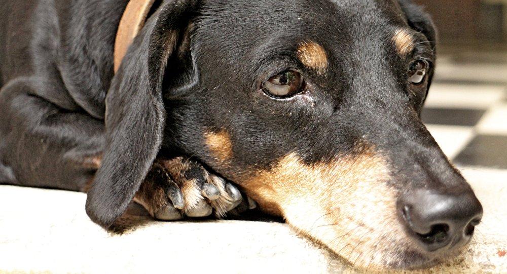 El 14 de octubre arranca una jornada de vacunación canina en Nicaragua