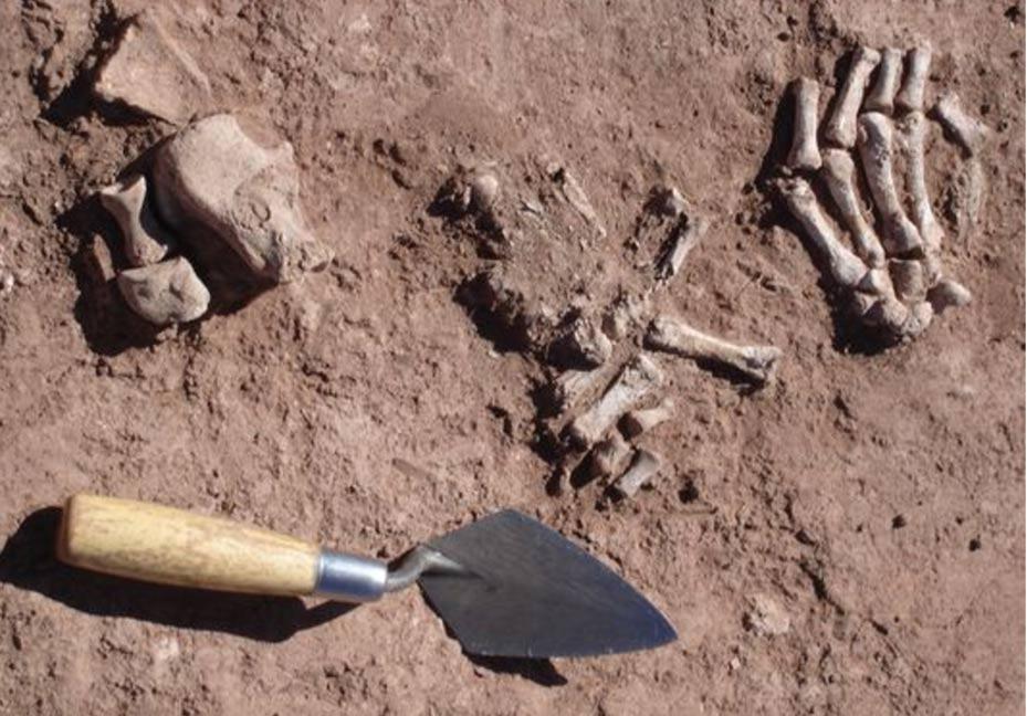 defleshed-human-bones-bolivia