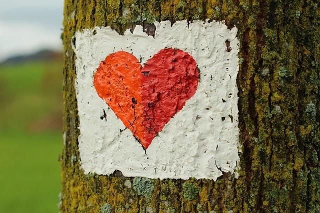 fotografia-corazon-pintado-arbol