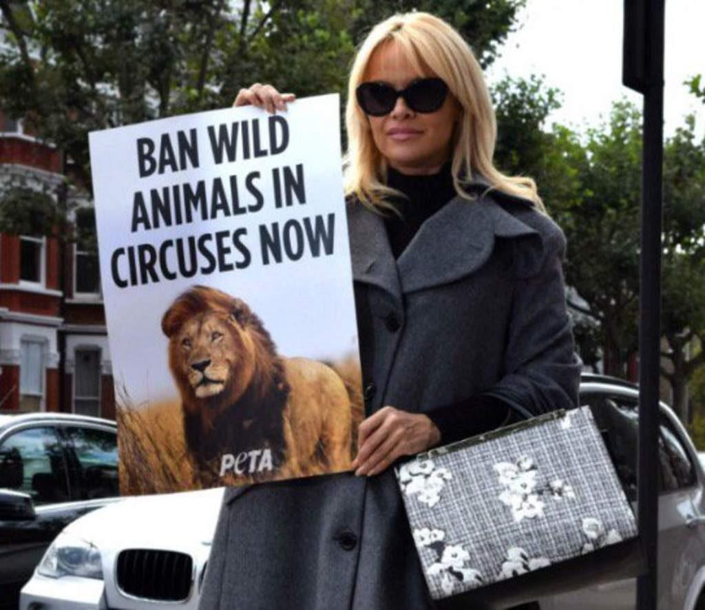 la-exhuberante-pamela-anderson-hace-campana-para-prohibir-los-animales-en-circos