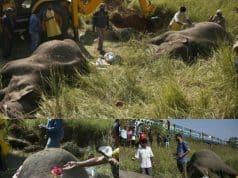 Dos elefantes murieron arrollados por un tren en La India