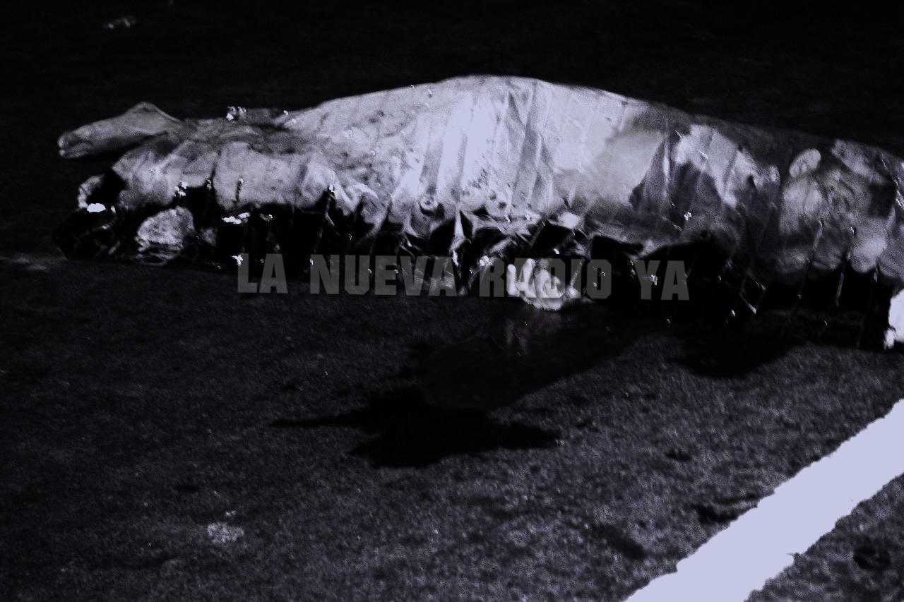 Moisés José Avelares murió atropellado esta madrugada