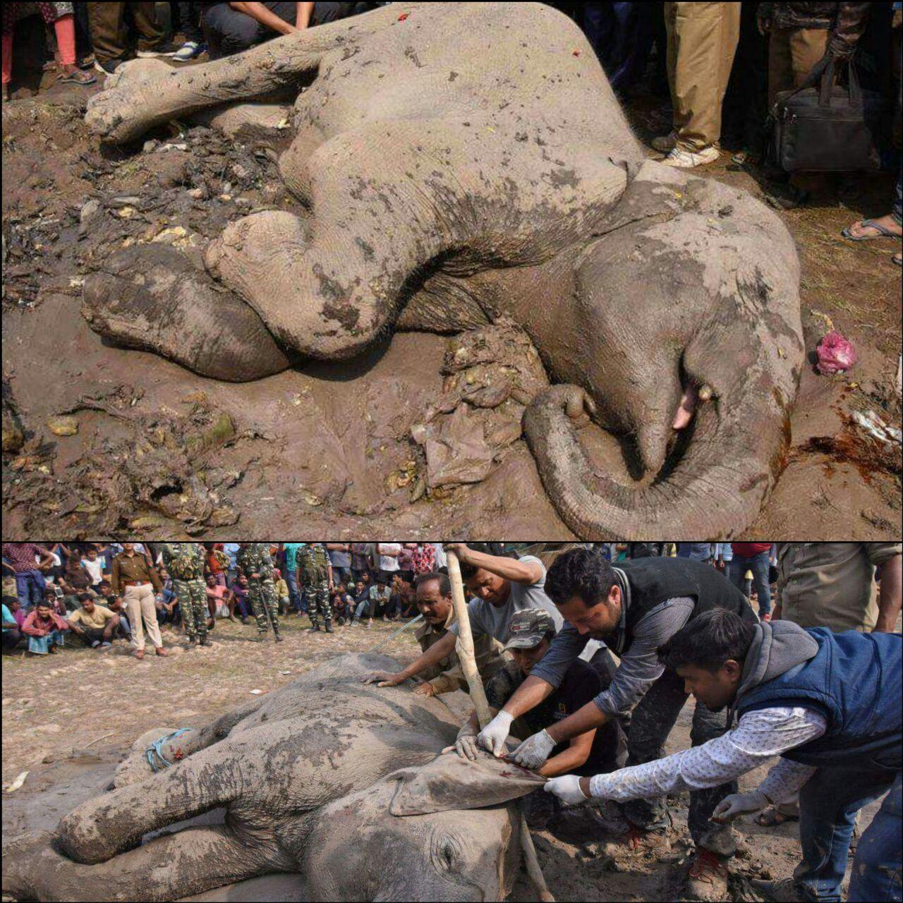 4 elefantes murieron y otro resultó gravemente herido al ser impactados por un tren en La India