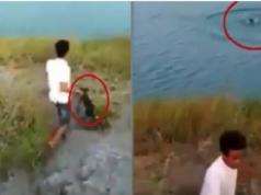 Indignación en Australia luego que un niño lanzó a un cachorrito a un río lleno de cocodrilos