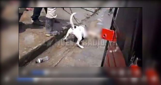 Imágenes del brutal ataque realizado por un pitbull contra un perro pequeño en El Cúa