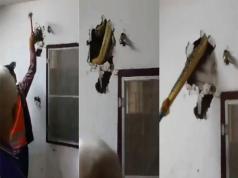 Encontraron una enorme pitón en una casa en Tailandia