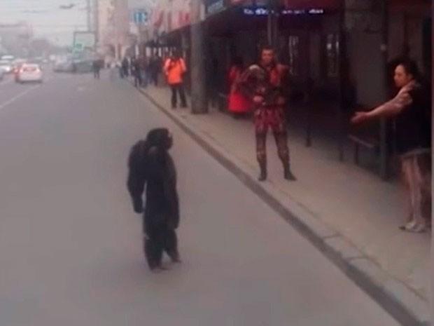 El chimpancé Richard se volvió viral tras escapar