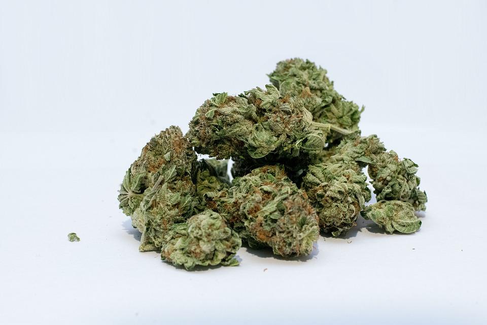 Incautan más de 20 libras de marihuana en Siuna y Managua - Radio YA