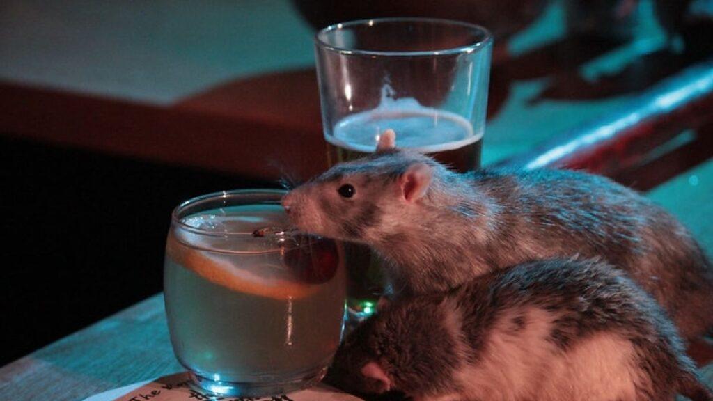 Bar estadounidense recibe a sus clientes con ratas