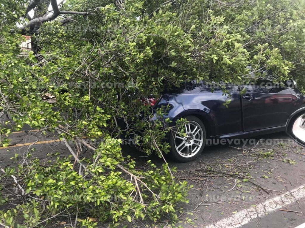 Una mujer sufrió el susto de su vida al caerle sobre su vehículo un árbol en Managua