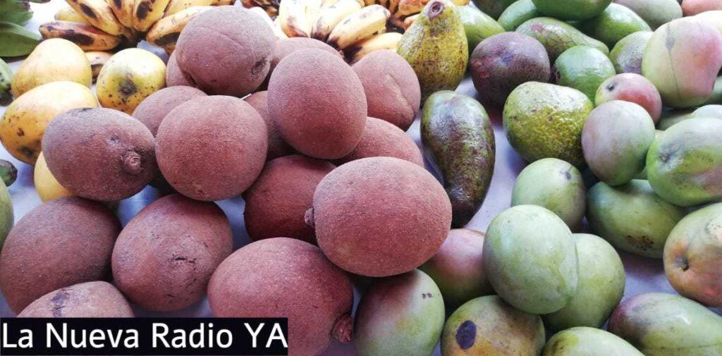 Mangos en el Mercadito Campesino