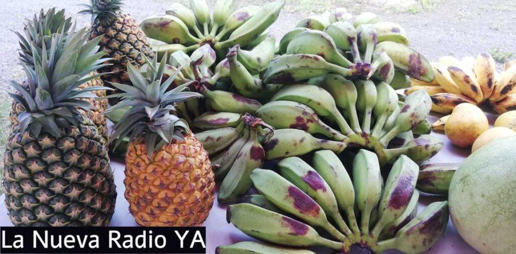 Piñas y Plátanos en el Mercado Campesino