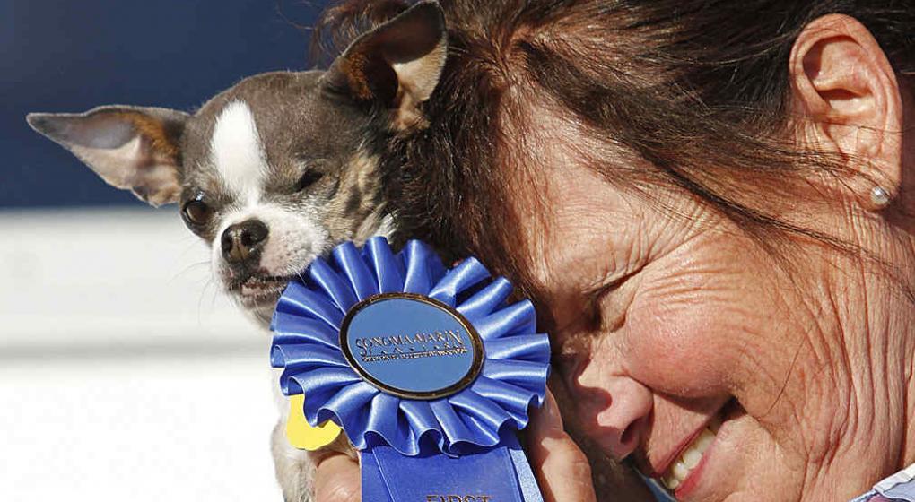 Llegó a Estados Unidos el concurso que le abrió paso a los perritos más feos del país, en donde su mayoría provenían de un refugio con traumas.
