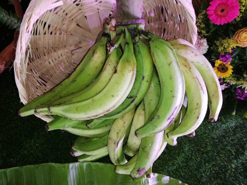 Desde el año 2018 se promueve en Nicaragua el manejo de fruto In Vitro, que produce frutos de mejor calidad y textura