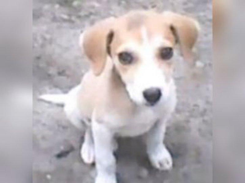 Coraje cuando era un cachorro: Fue rescatado de la calle y sufría de muchas enfermedades