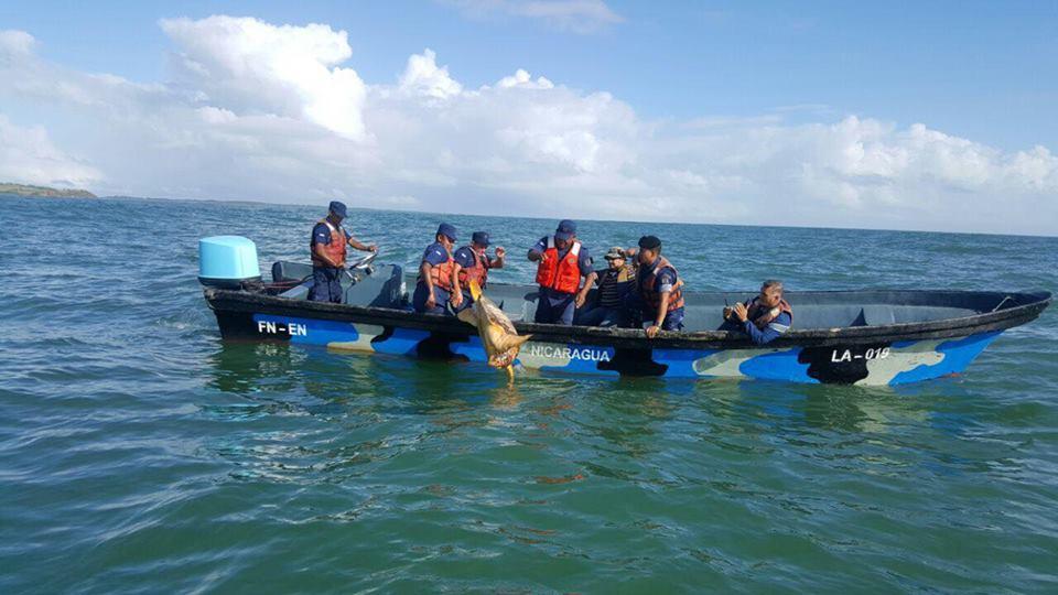 Fuerza Naval libera tortugas
