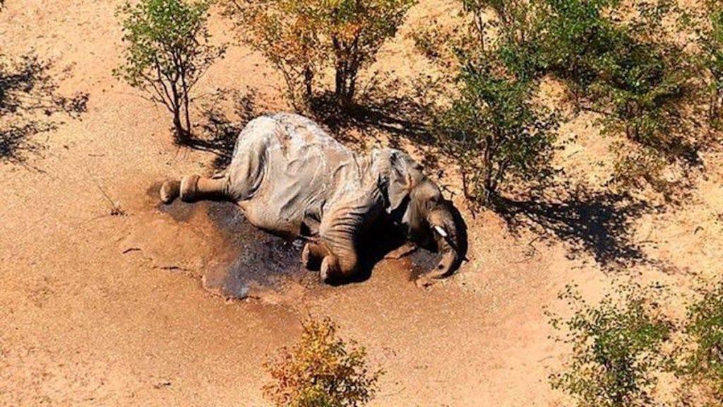 330 elefantes aparecieron misteriosamente muertos en el norte de Botsuana